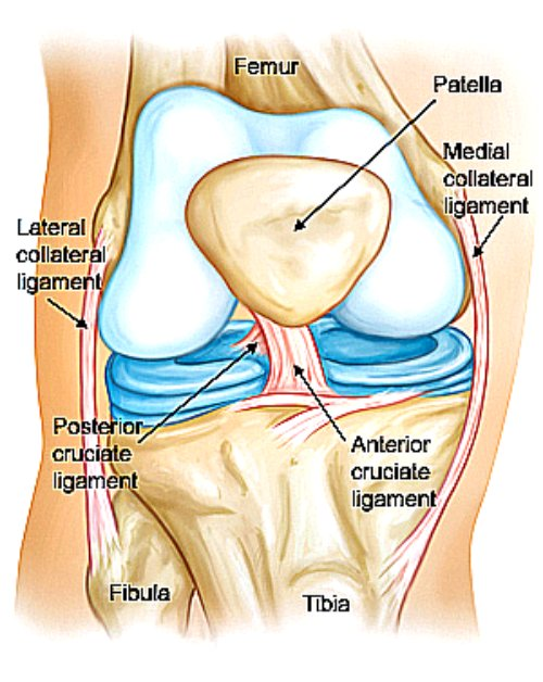 pcl knee injury, pcl injury, pcl injury symptoms, knee injuries pcl, pcl soccer injury