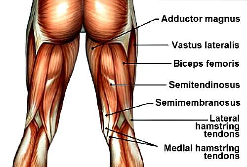 hamstring soccer injury, hamstring injuries, hamstring tendon injury, torn hamstring injury